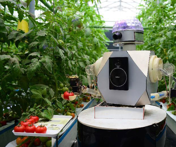 机器人采摘西红柿