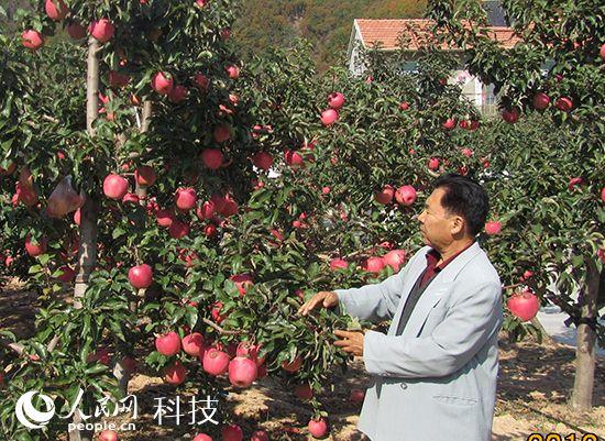 李茂生与他种植的果树