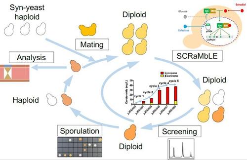 新进展!天津大学研究成果填补基因组结构变异的技术空白