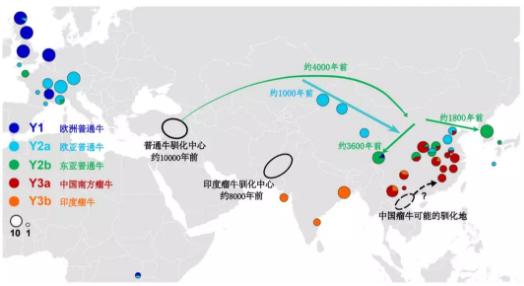 东亚黄牛的三个血统来源