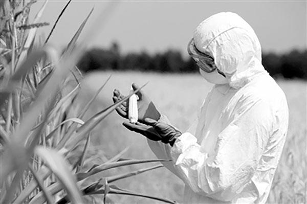 欧洲农业生物技术遭遇重创