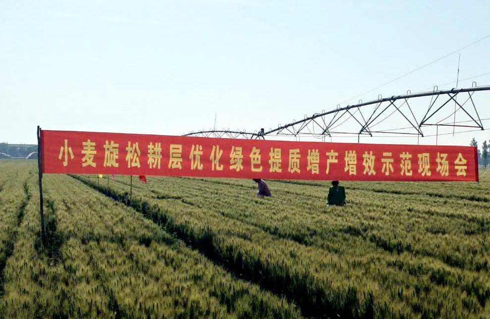 """""""粮丰工程""""再传喜报:新技术助力小麦增产两成多"""