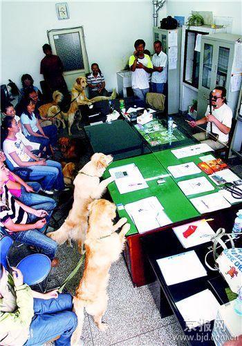 首批国产导盲犬为北京残奥会作准备