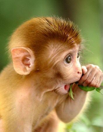 动物园里的动物可真多补充完整答:动物园里的动物可真多,它们很可爱.