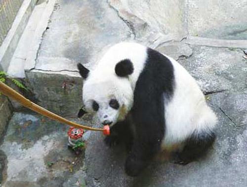 深圳动物园合照