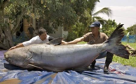 盘点世界9个最大动物 中国900公斤猪破纪录