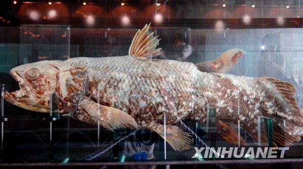 for Longest living fish