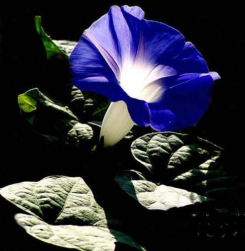 花卉可测室内有毒气体浓度