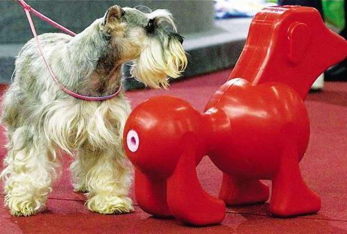 狗狗也有情趣用品[情趣]组图欧美内衣乳胶图片