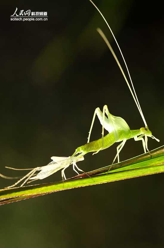 看昆虫如何保持平衡