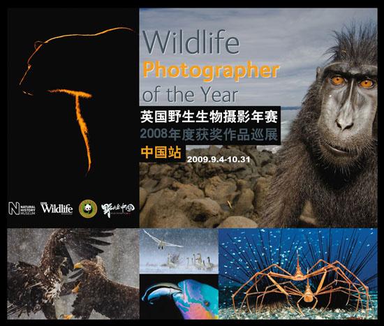英国野生生物摄影年赛08年度获奖作品北京动物园展出
