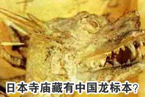 藏有中国龙标本?